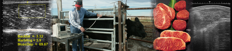 beef cattle ultrasound services, cup ultrasound, cpec ultrasound, feedlot management, reproduction fetal services, first canadian silencer dealer